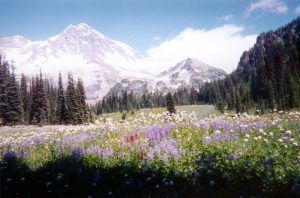 Mount Rainier from Indian Henrys Hunting Grounds-National Park Service